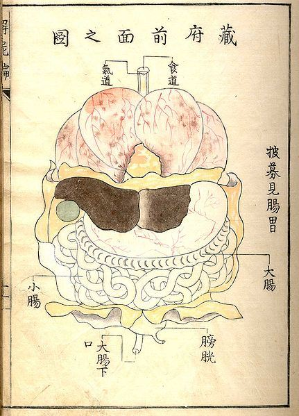 Drawing from Kaishi Hen (Analysis of Cadavers), 1772