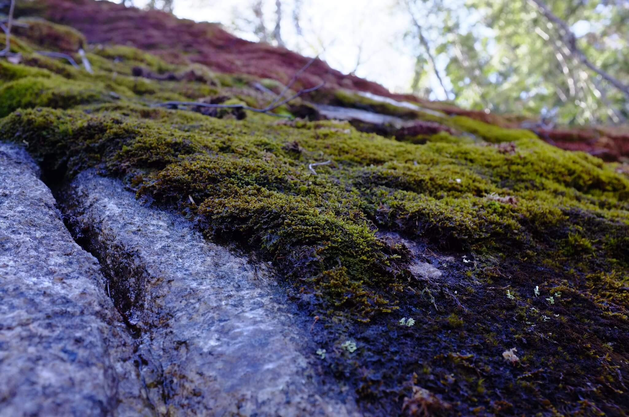 Close-up of mossy cliff face